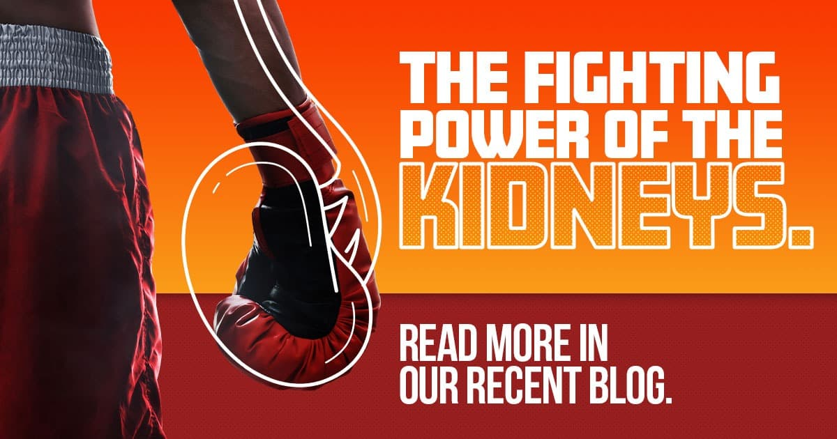 The fighting power of the kidneys. Read more in our recent blog! Boxing gloves shaped like kidneys